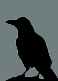 corvus1