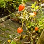 Mer japanska lyktor i trädgården