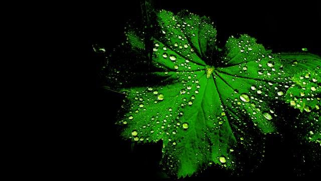 Gröna och sköna blad med droppar