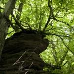 Träd som klamrar sig fast