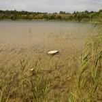 Sjön på nära håll
