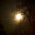 Måne bakom träd 2