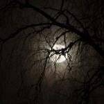 Måne bakom träd 1
