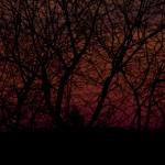 Solnedgång bakom grenverk