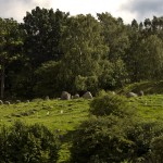 Gravfält strax utanför Skara