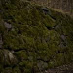Gammal mossklädd stenmur