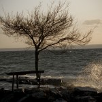 Träd i hård blåst