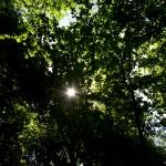 Sol genom bladverk