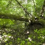 Trädakrobatik
